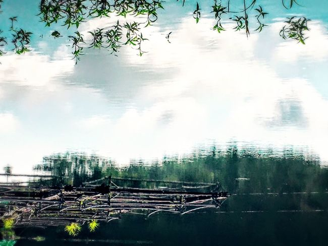Upside Down Sky Growth Reflection Plant Nature Tranquility Scenics Beauty In Nature Day Outdoors Non-urban Scene Surface Level Agriculture Remote Abundance Cloud - Sky Rural Scene Green No People Eyeem Philippines TravelPhilippines EyeEm Nature Lover