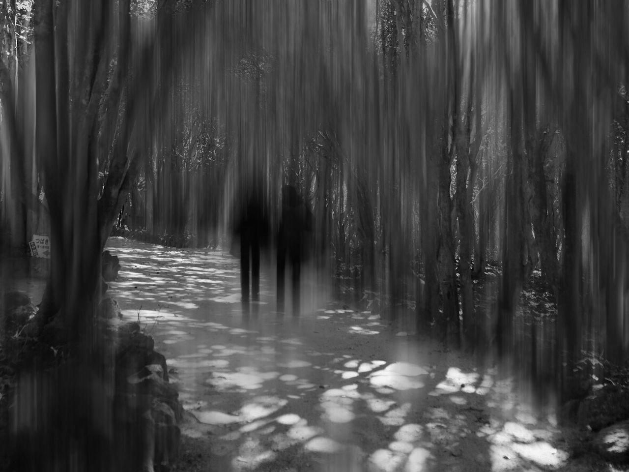 Japan Tree Fujifilm FUJIFILM X-T1 Japan Photography Light And Shadow Blurred Motion