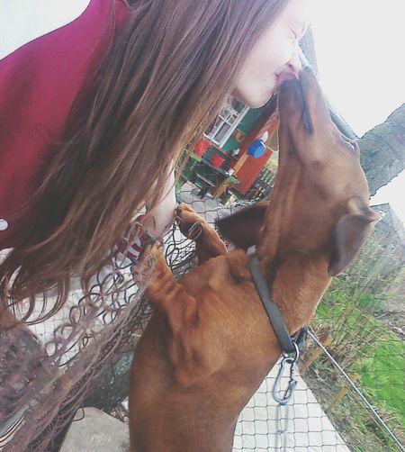 собака моя любовь чмок