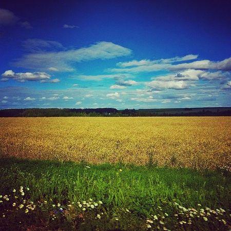 татарстан Просто красиво поле небооблака