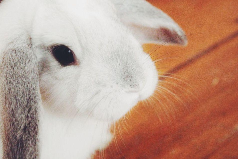Beautiful stock photos of rabbit, Animal Head, Animal Themes, Close-Up, Cute
