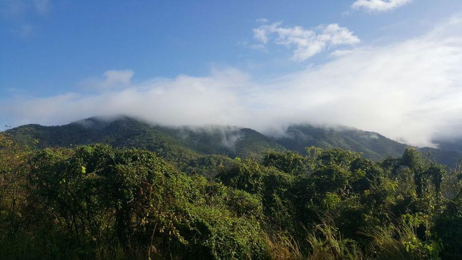 Salinas, PR. Landscape Paisaje Mist Neblina Nature Mountain