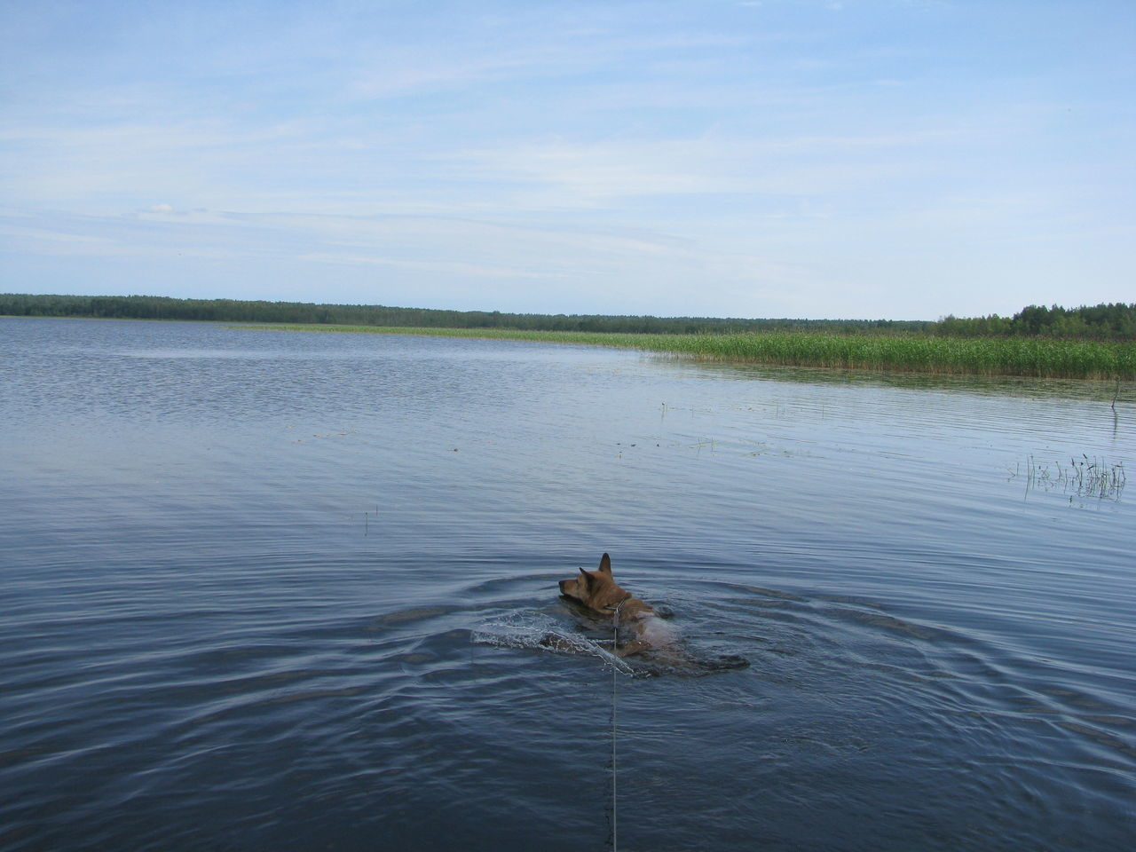 Beauty In Nature Blue Cloud Day Dog Dog Swimming Grass Lake Lakeshore Nature Water