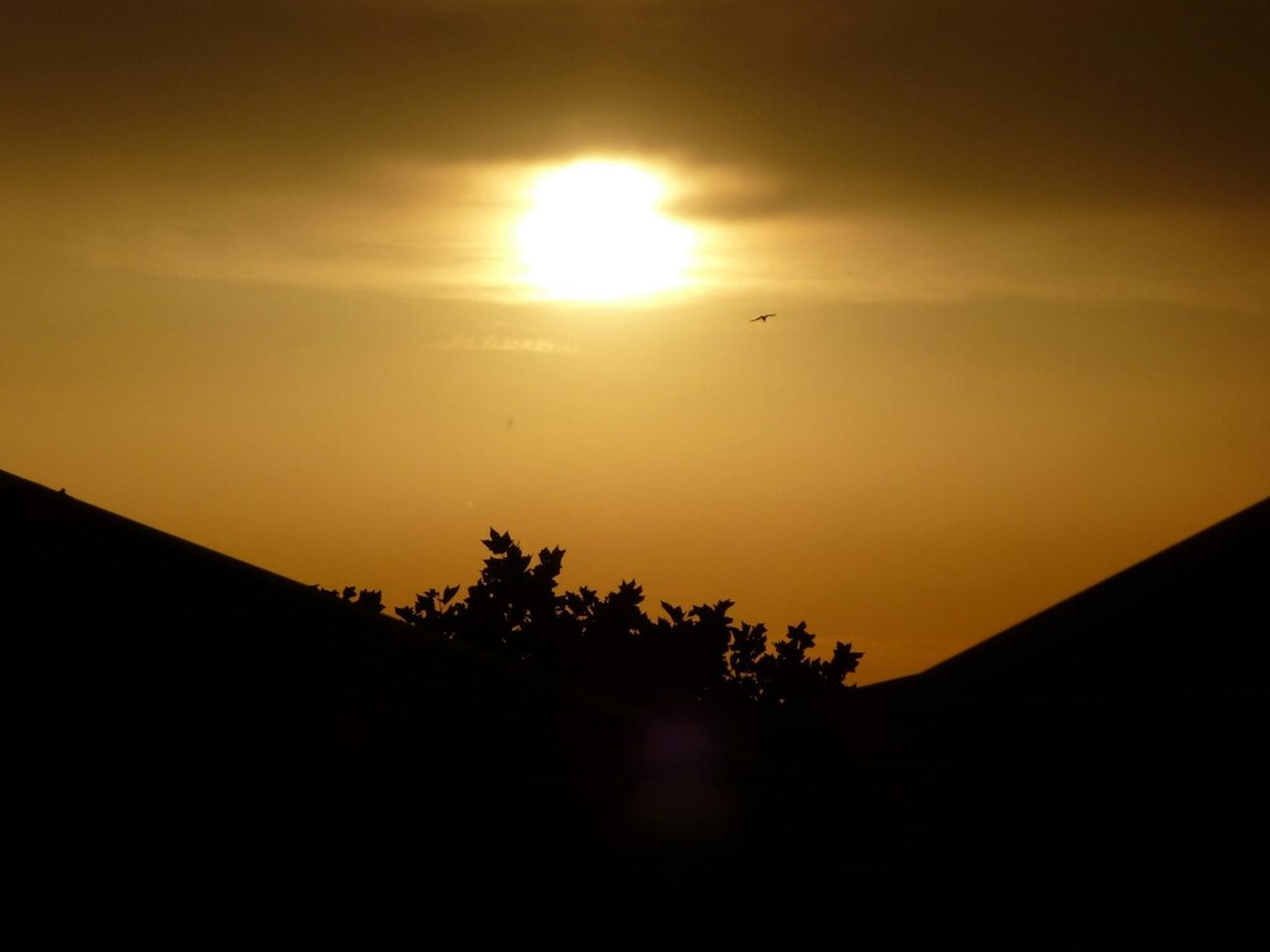 sunset, silhouette, nature, beauty in nature, scenics, sun, orange color, tranquil scene, sky, tranquility, no people, tree, outdoors, landscape, day