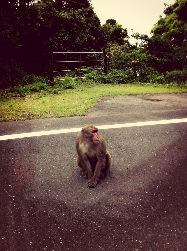 what's up japanese monkey! Animals Relaxing Taking Photos Great Views