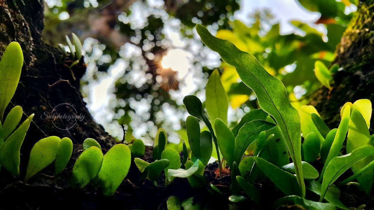 Sickphotography MyLifeMyRules Mymagicfingers Myphoto Aldrirally INDONESIA Nature Photography