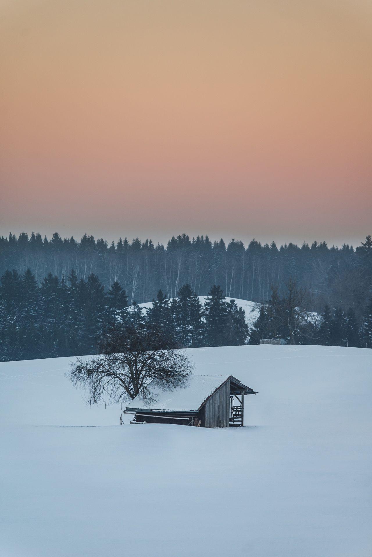 Winter Snow Nature Tree Scenics Shack