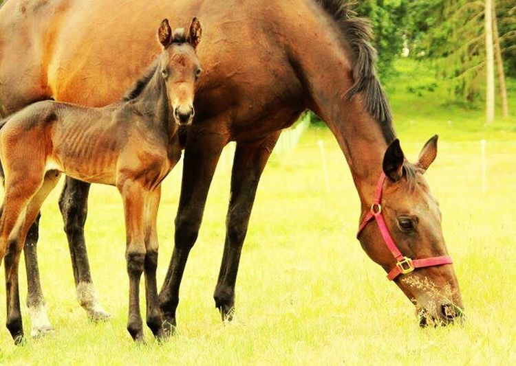 Horses Animals Livestock Filly Mare Mamaandbaby Babyhorse Check This Out Country Life