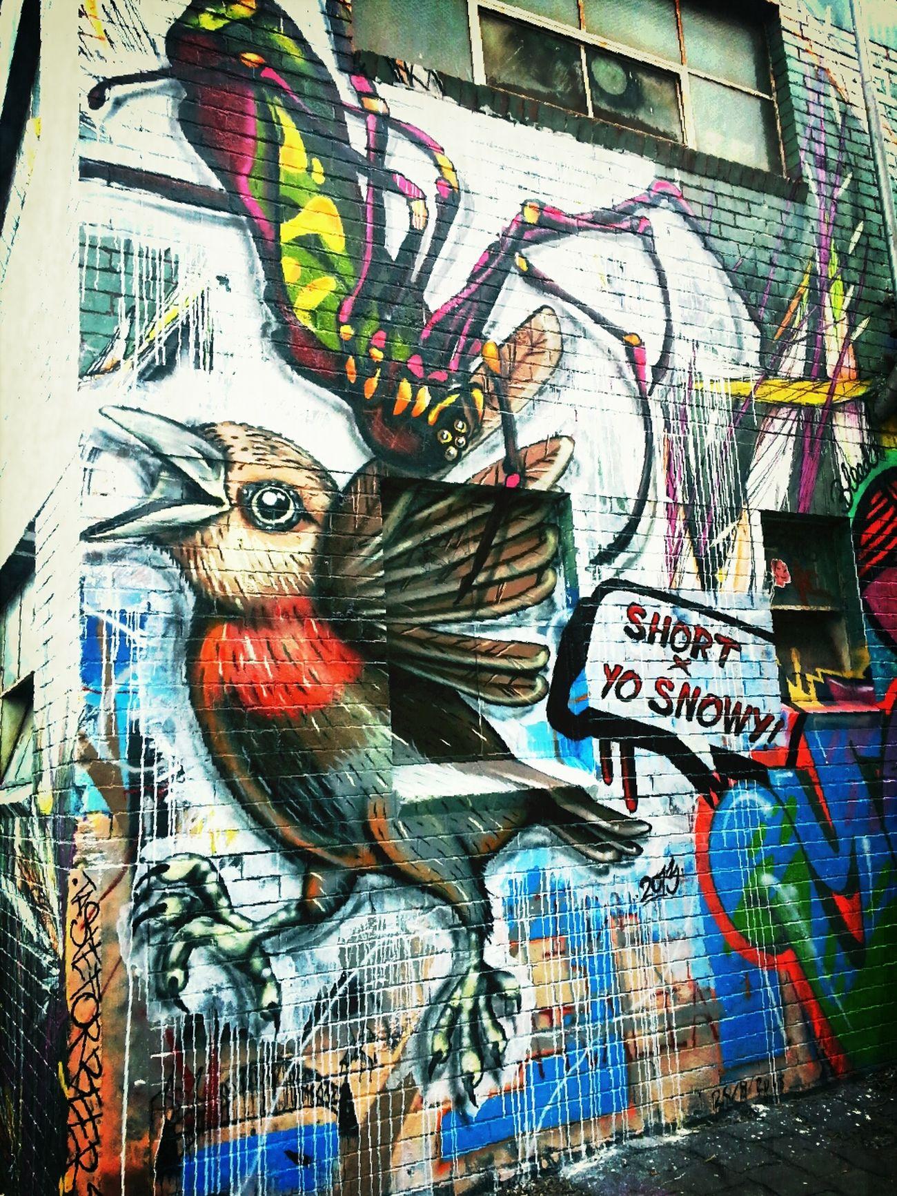 Snowy Boy red robin x short Spider Streetart in brunswick Melbourne Graffiti