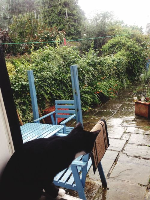 Weather Wonders Should I go out in this rain, ponders Kip the kitten