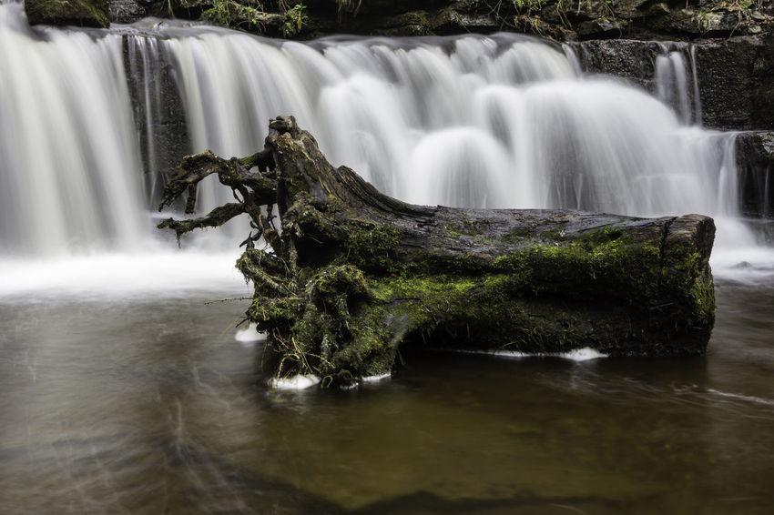 Scaleber Force and Tree Stumo, North Yorkshire Beauty In Nature Day Landscape Landscape Photography Long Exposure Motion Nature No People Outdoors Scenics Tree Vacations Water Waterfall