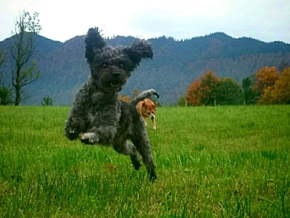 Field Grass Nature Day Pets Animal Themes Beauty In Nature Nature Animals In The Wild Domestic Animals Happy Dogs