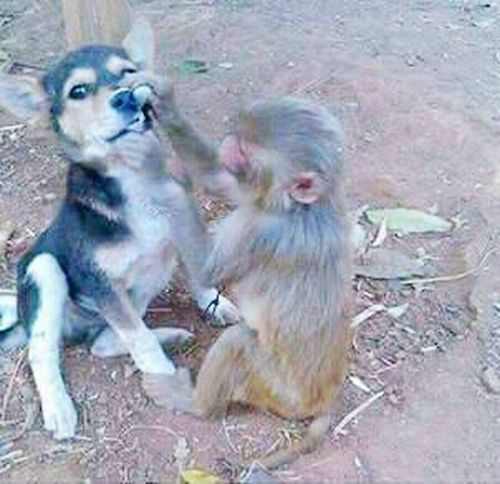 Animal Themes Two Animals Togetherness Monkey Dog Checking Teeth LOL!