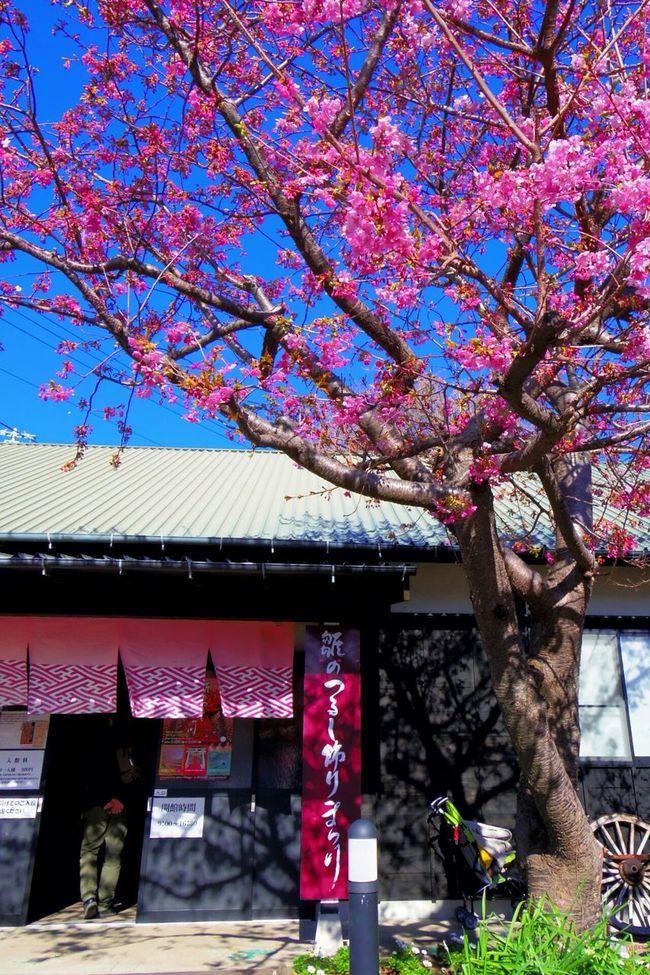 Sakuraflowers Sakura Blossom Sakuracollection Sakura Flowers Pentax PENTAX Q Japan Photography Travel Photography Inatori Onsen