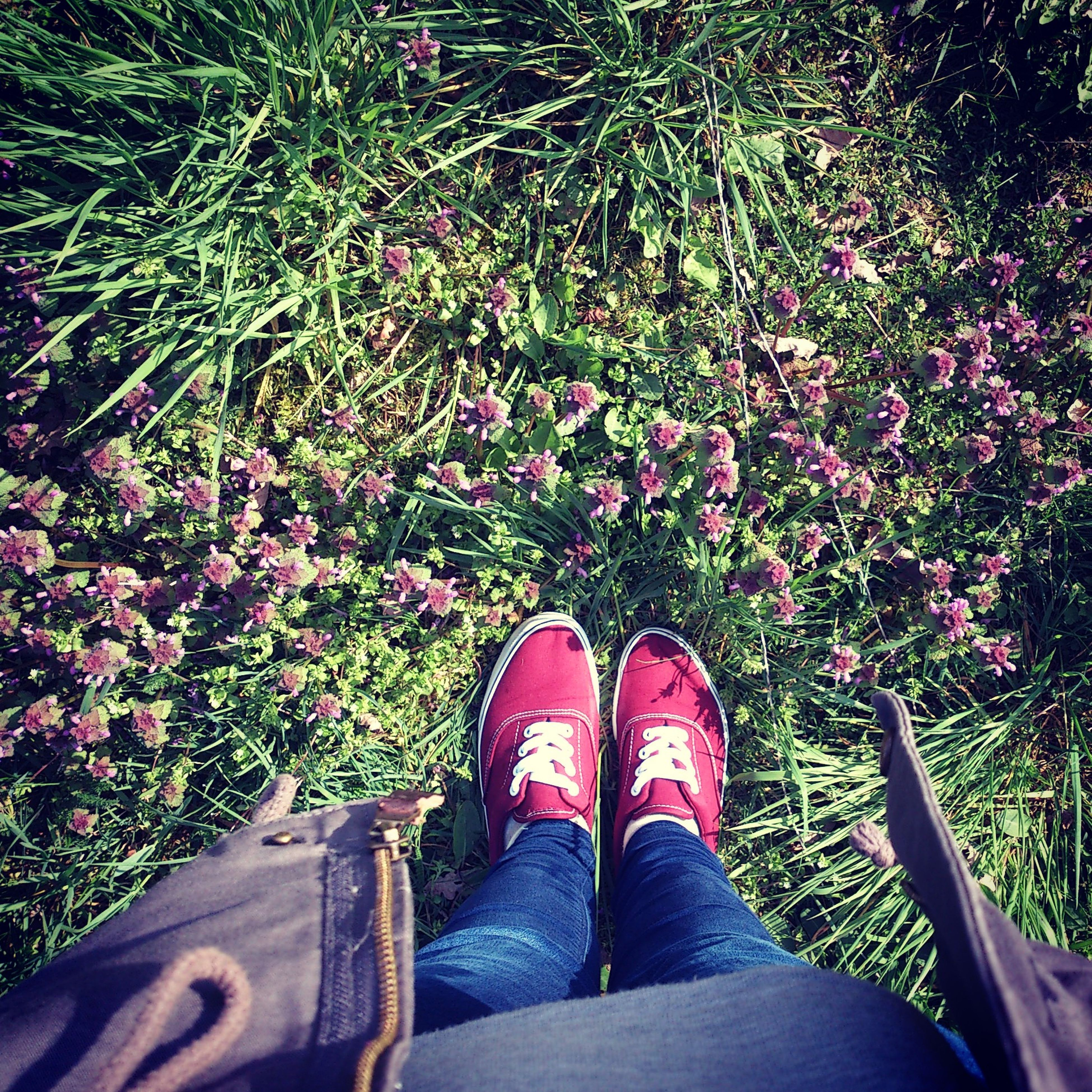 low section, person, shoe, personal perspective, standing, human foot, lifestyles, flower, high angle view, footwear, jeans, leisure activity, growth, men, plant, outdoors