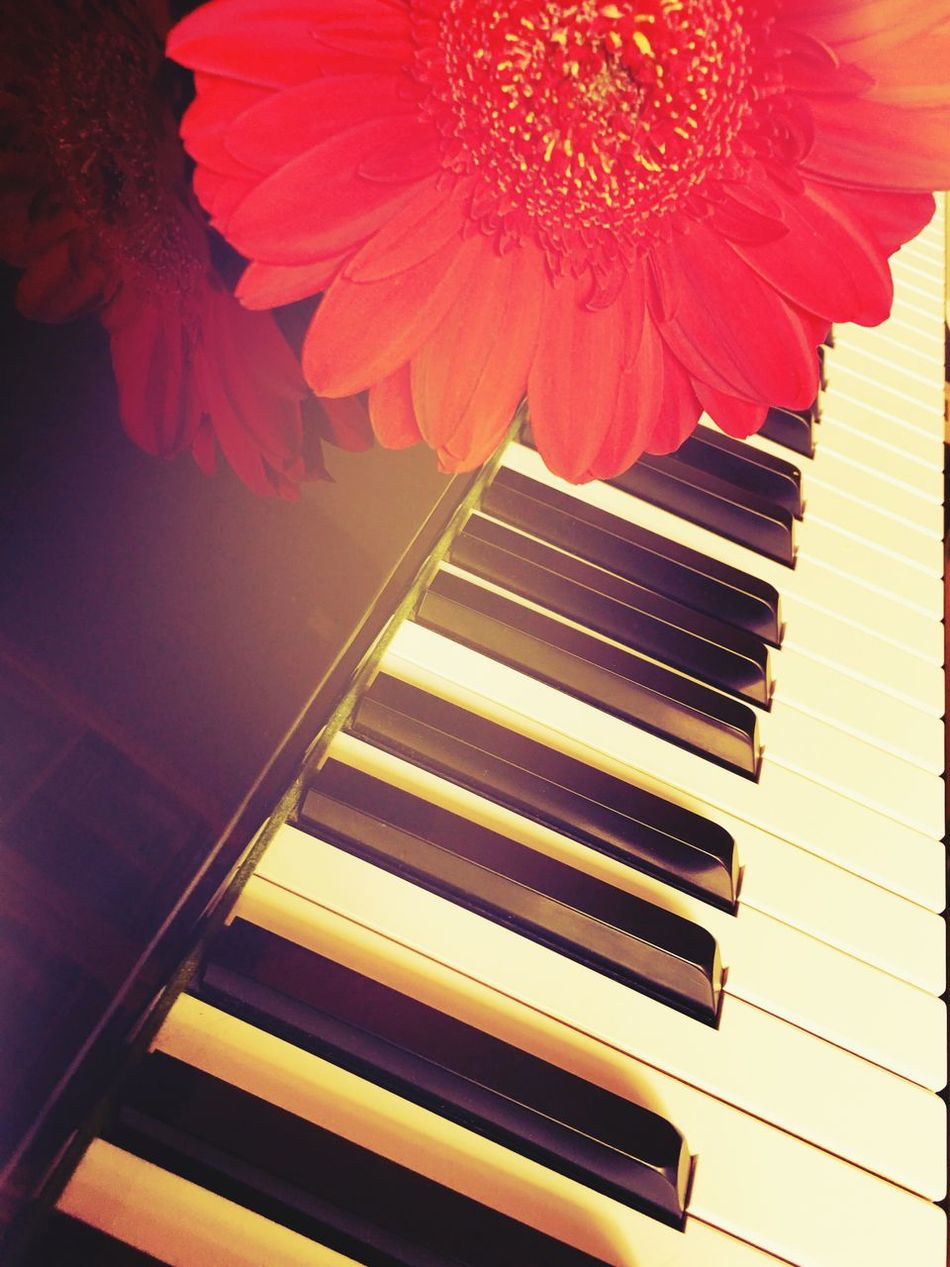 Hi Friends Music Is My Life Music From My Heart Love Tenderness Piano Keys