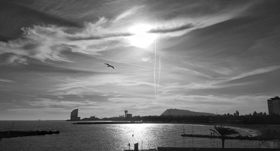 Bnw Bnw_collection Bnw_captures Bird Sea Clouds And Sky Beach I Love My City Point Of View Capture The Moment Samsung Galaxy S6 Edge Sea And Sky Relaxing Shadows & Lights Light And Shadow EyeEm Bnw