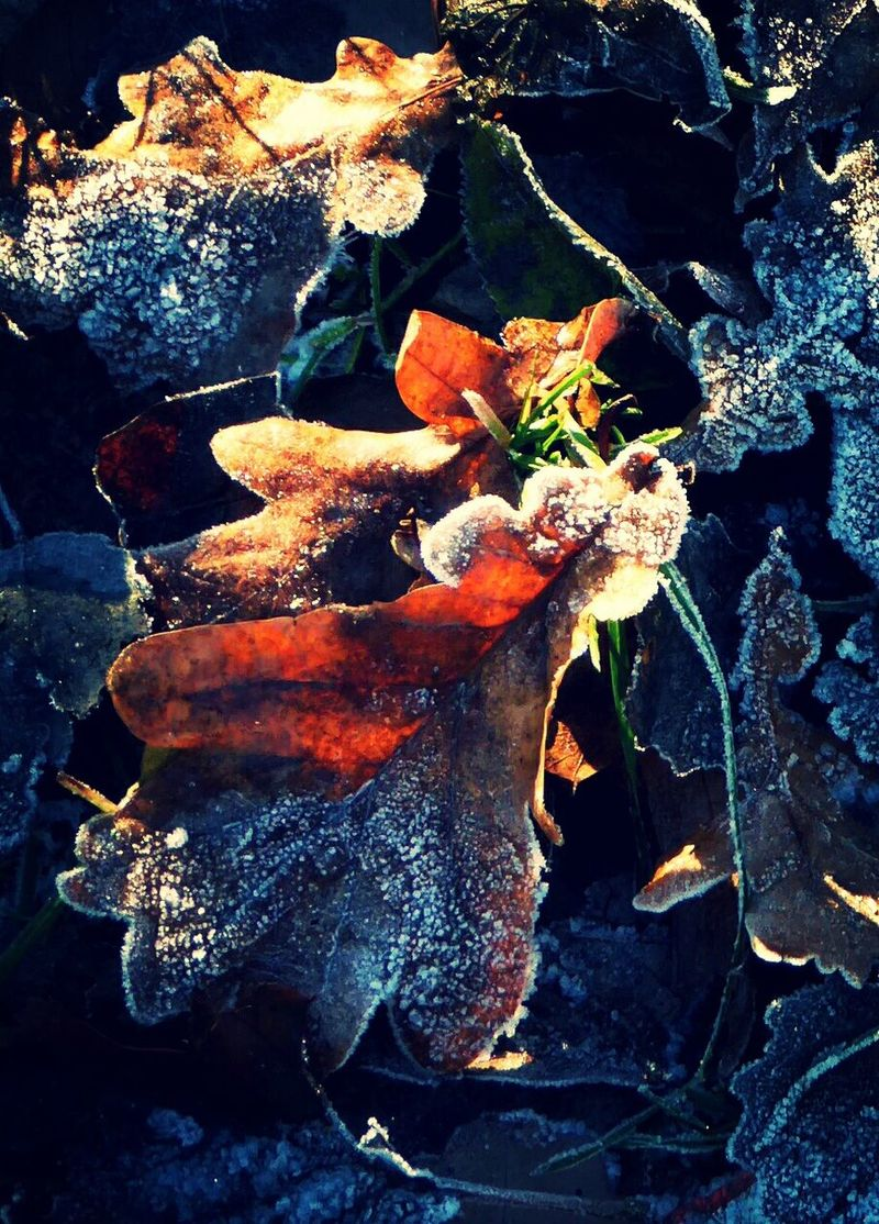 Playing With Effects Frozen Nature Frostymorning Sunny Day 🌞 For My Friends 😍😘🎁 Cold Temperature Tranquil Scene Tranquility Close-up Frozen Grass Frozen Leaf Beauty Of Evanscence frozen beauty Colors Are My Life😍