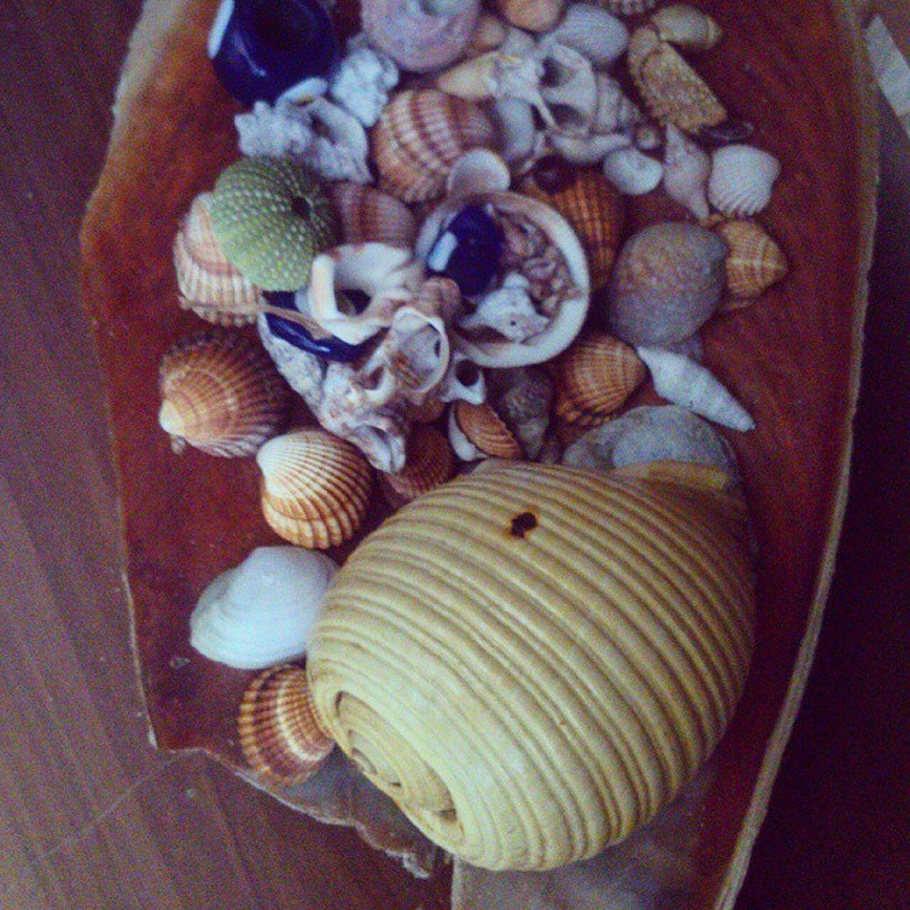 Yıllar önce çıkarttığım kabuklar. / Ive collected some sea shells when i was child. Bodrum Bağla Akyarlar Seashell instagram instagood fotoğraf photo photography