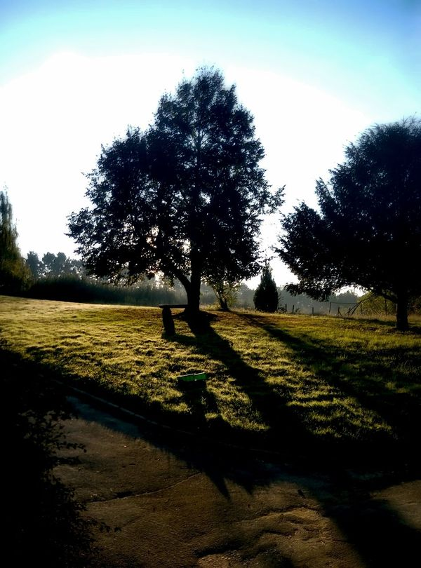 Tree Nature Growth Shadow Sunlight Field Tranquility Outdoors Scenics Landscape Beauty In Nature Tranquil Scene Agriculture Sky No People Day Maruševec