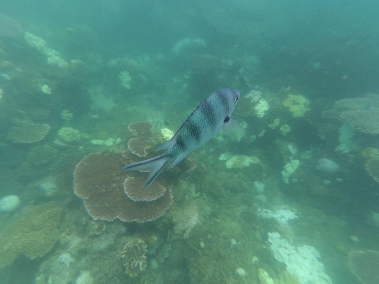 UnderSea Sea Life Animal Themes Swimming