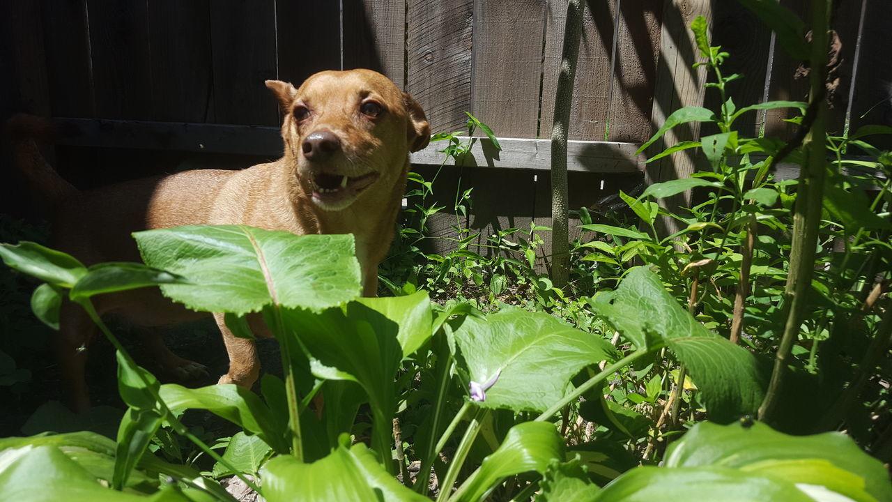 Animal Themes Dog Dog In Backyard Domestic Animals Funny Dog Face No Filter No Edit One Animal Pets