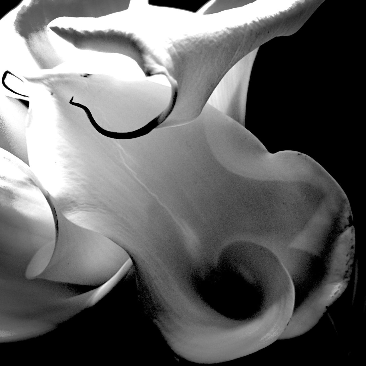 Close-up Flower Petal Fragility Nature Beauty In Nature Flower Head Outdoors No People Day Calla Lily