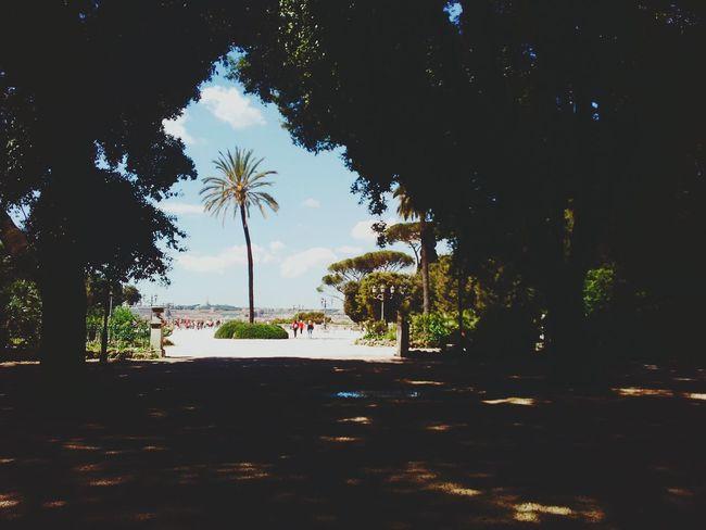 Palma Terrazza Sole Cielo Bellezza Roma Pincio Giardino Caldo Tour Vita