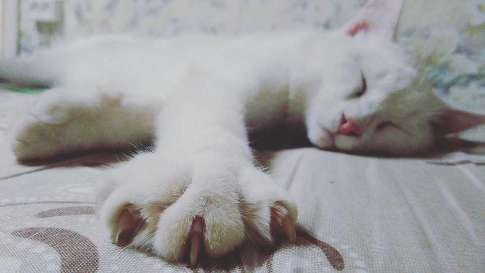 Animals Cats I Love My Cats  My Cats Beautiful Animals  Beautiful Cat