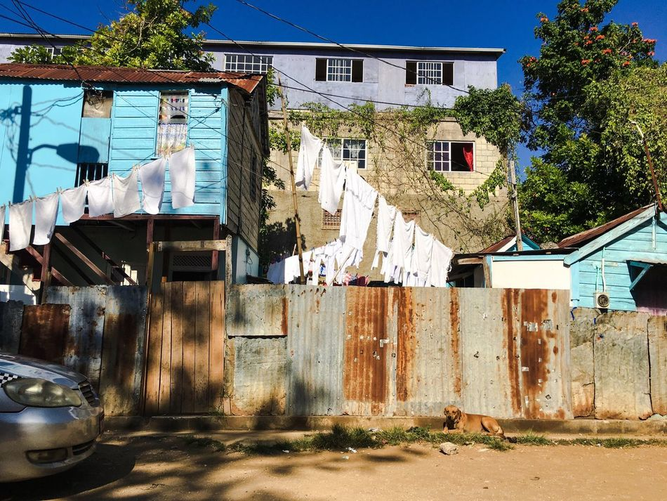 Clothesline Laundry Whites Fence Dog Mobay, JA  Sunny Friday