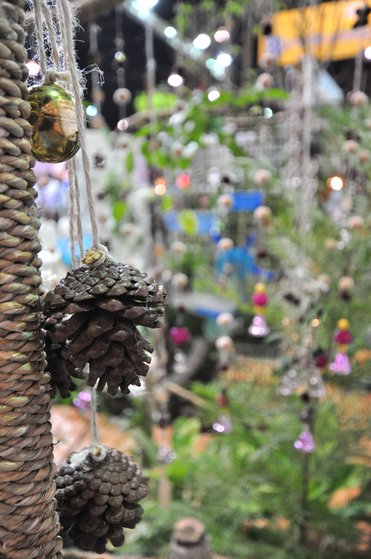 Hanging garden decorations are made with dried pine cones. Adorn Beautiful Blind Branch Close-up Day Decoration Focus On Foreground Freshness Garden Group Hanging Light Nature No People Outdoors Pine Cones Plant Reflections Ropes