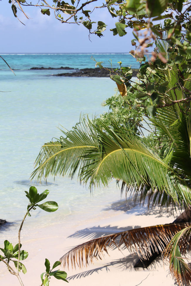 Beach Coral Reef Crystal Clear Crystal Clear Waters Fiji Island Islandlife Isolation Lunch Ocean Pacific Palm Leaf Palm Trees Paradise Paradise Beach Reef Relaxation Samoa  Sand Savai'i Tonight Tropical Paradise Turquoise Vegatation War