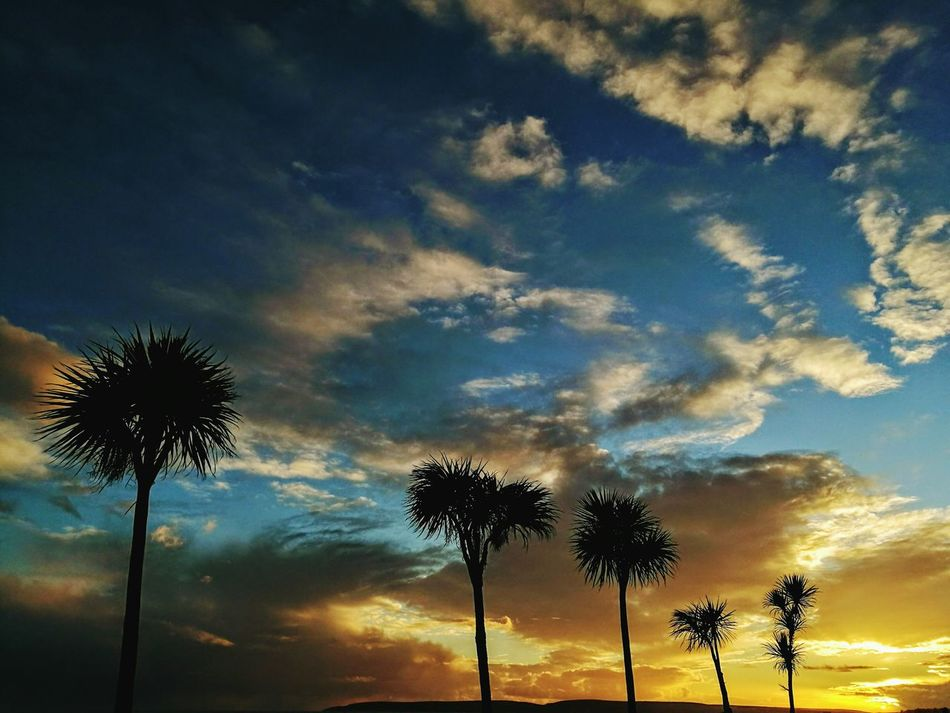 Palm Tree Beach Photography Beauty In Nature My Kind Of Beautiful :) Sunset Lovers Nature Photography Sunset_collection Beauty In Nature Destinations Horizon Over Water Painting Special Moments It's The Little Things Lights And Shadows Love ♥ HuaweiP9