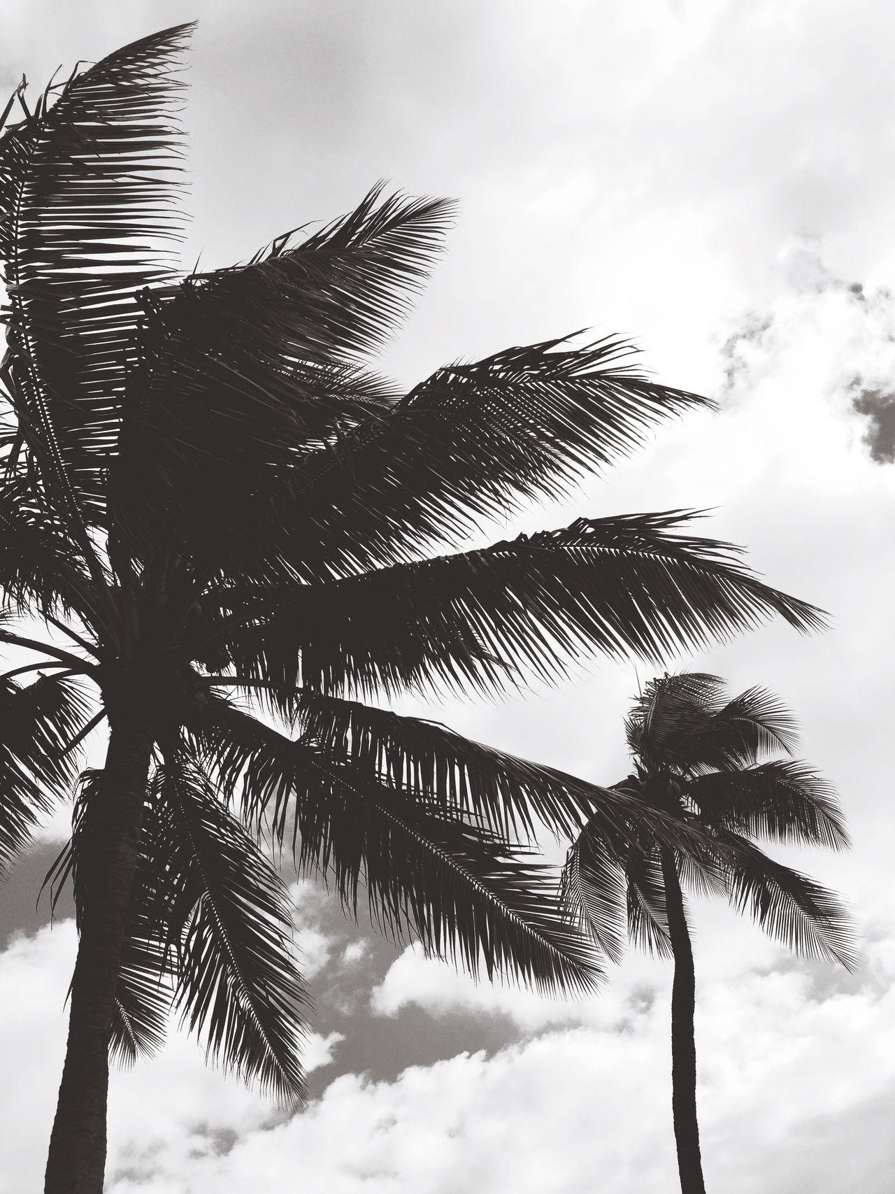 Blackandwhite Palm Trees