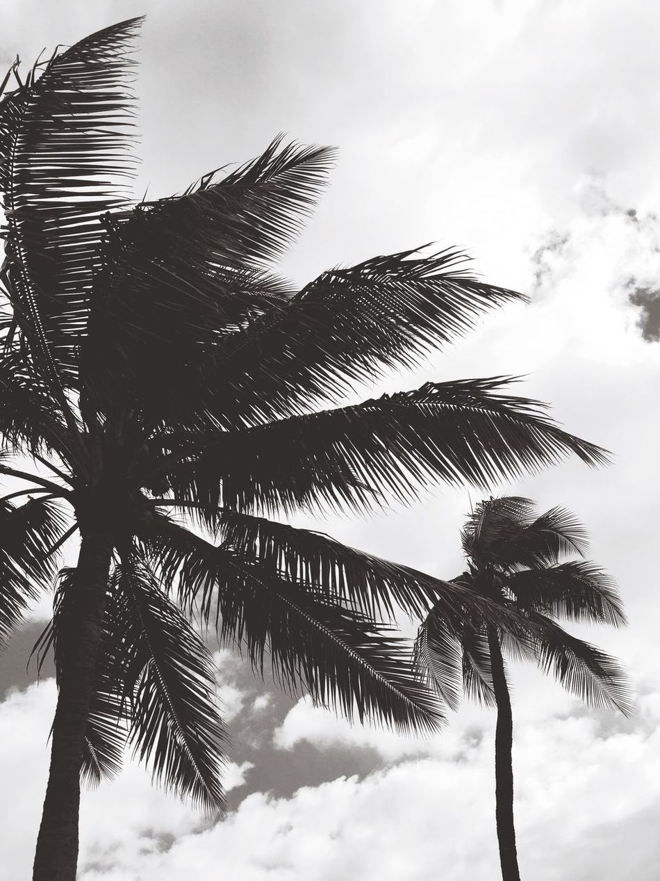 Blackandwhite Palm Trees