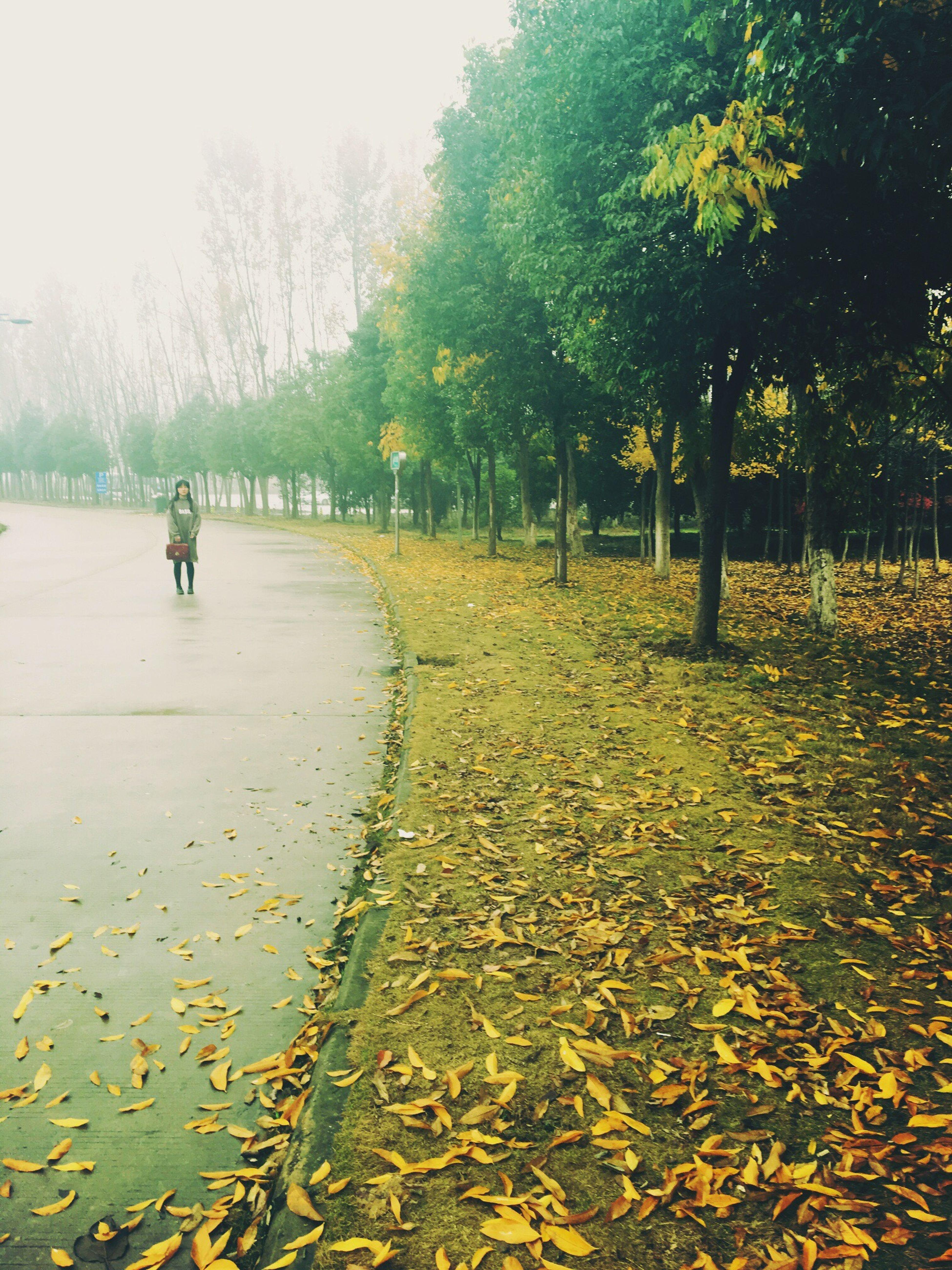 Autumn Senery