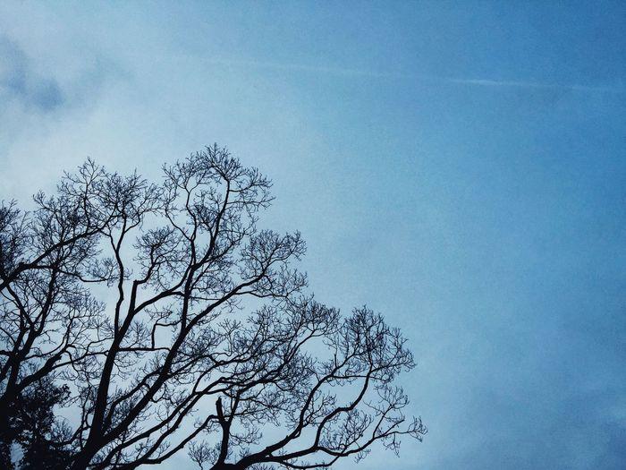 天際。如果說藍色光不好,那天空就甭看了👀 天空 Sky