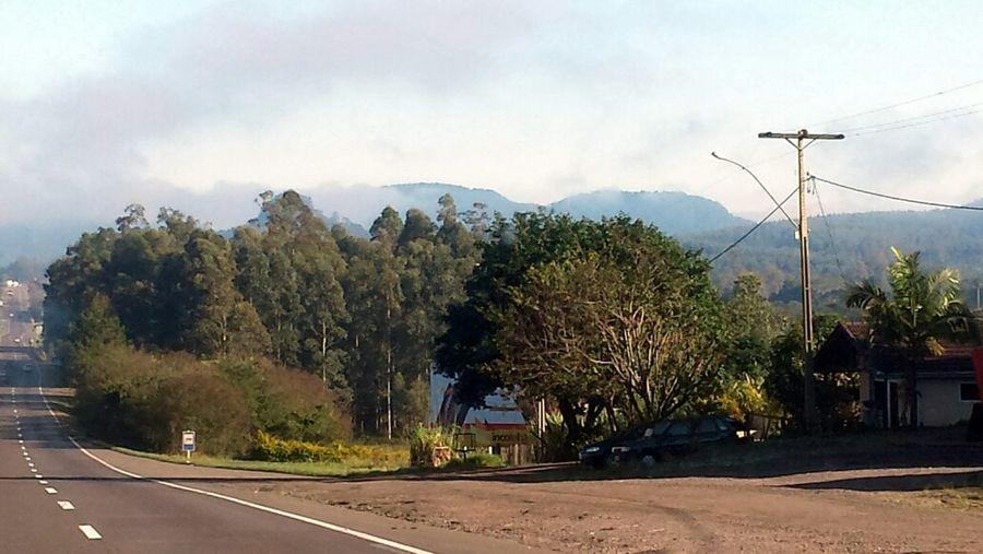 Road Trip Brazil Hugging A Tree The Explorer - 2014 EyeEm Awards