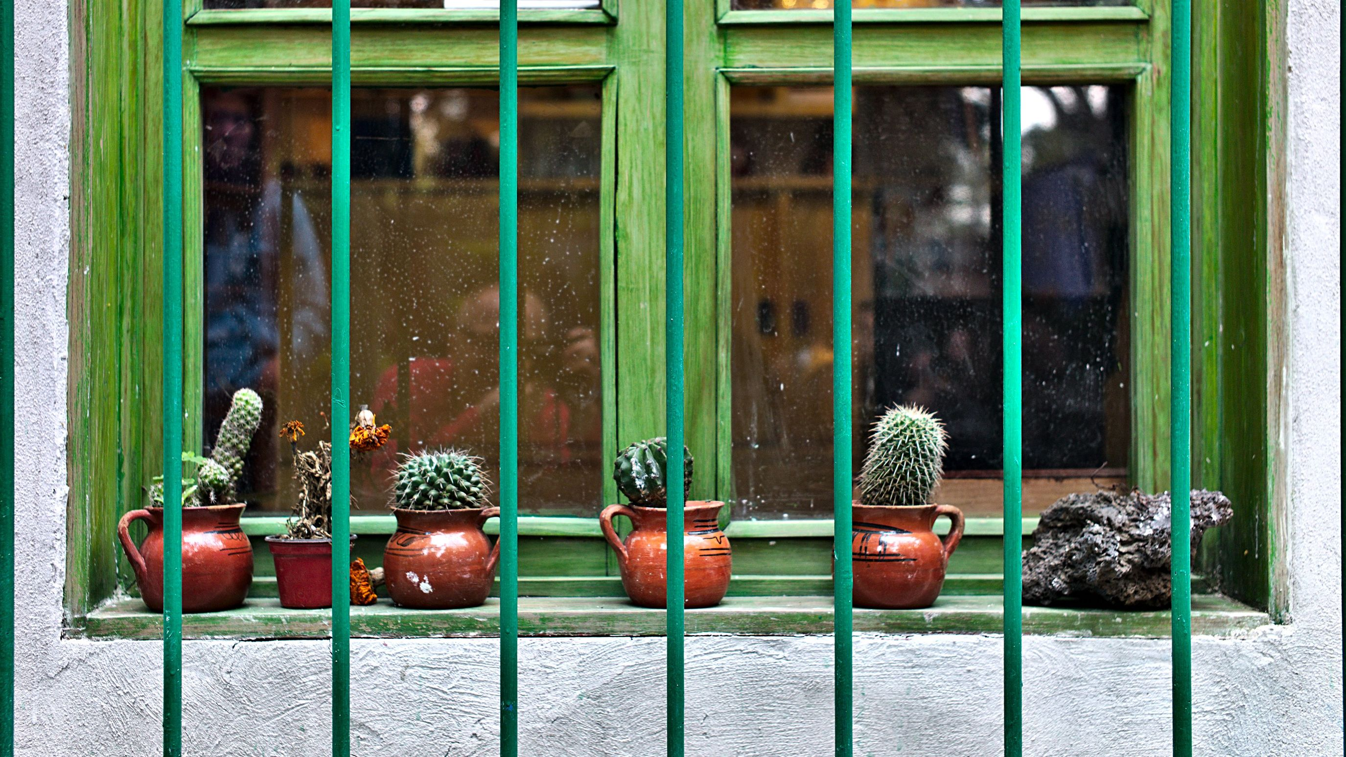 cactus on window sill Architecture Built Structure Cactus Day Frieda Kahlo Museum Green No People Outdoors Rock Security Bar Window