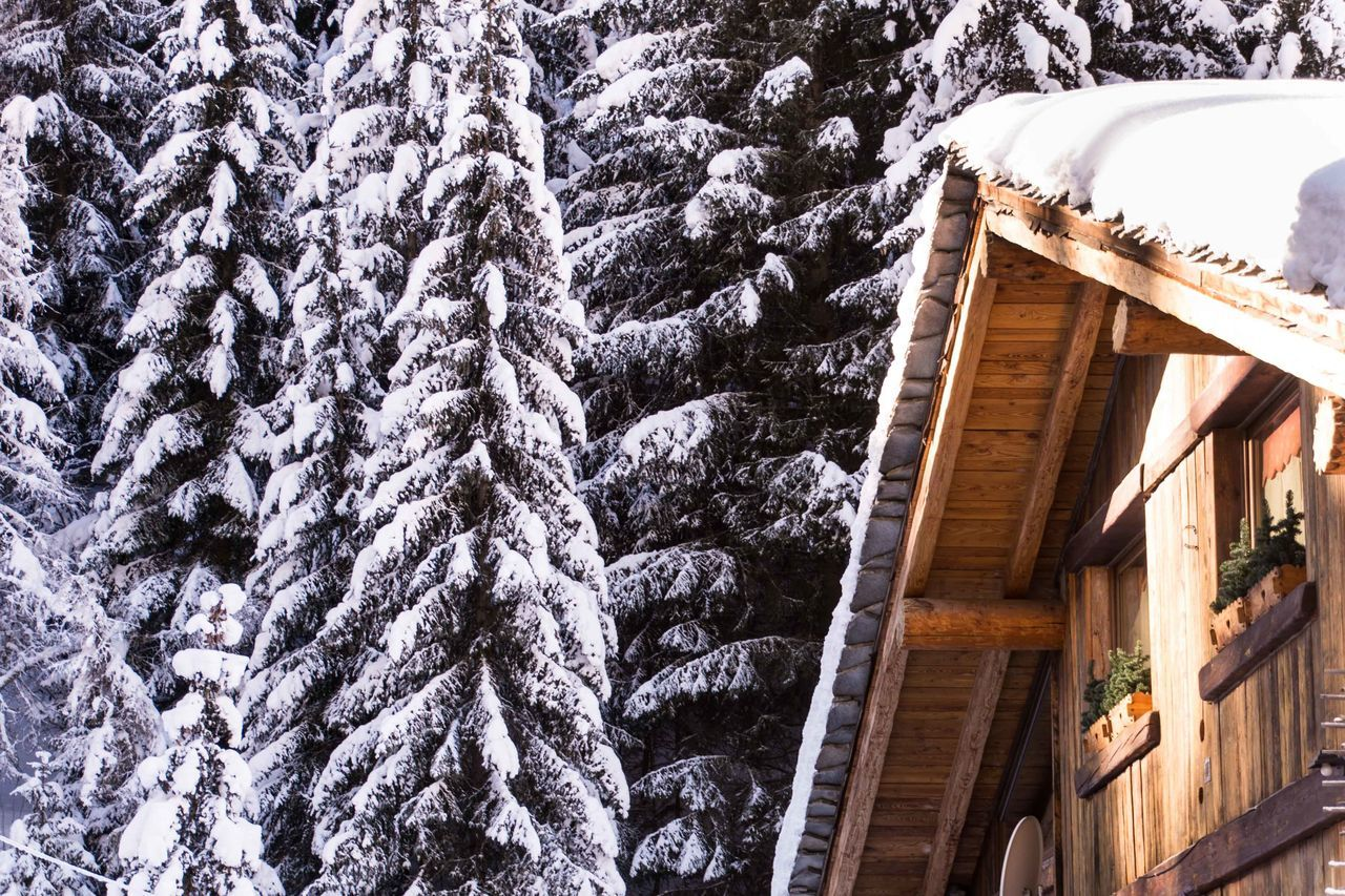 Chalet Cold Temperature Forest Trees Mountain Mountain Hut Nature No People Outdoors Snow Tree Winter