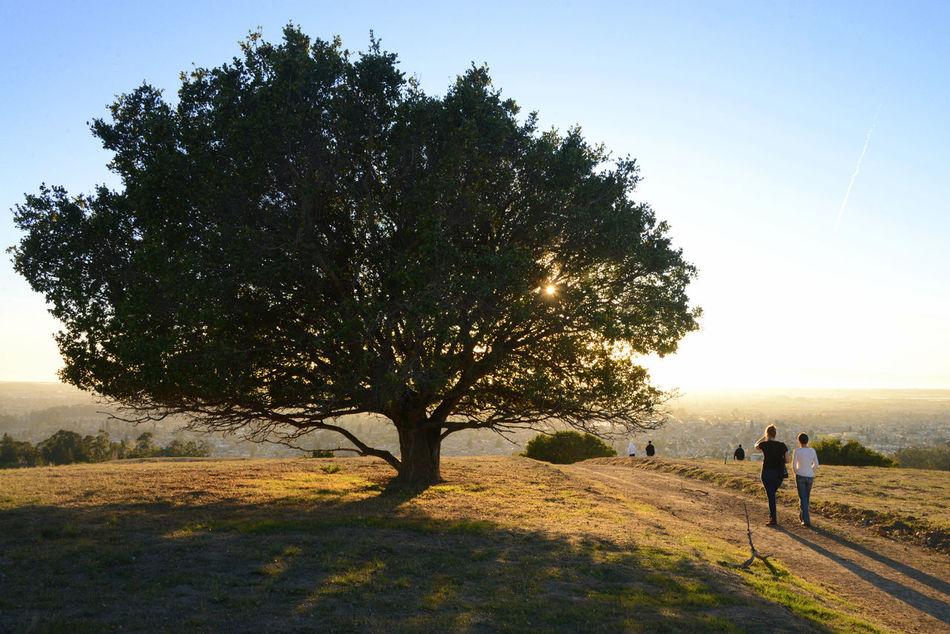 Sunset walk at Knowland Park Oakland California Sunset Walk Light Trees Soaking Up The Sun Friends View