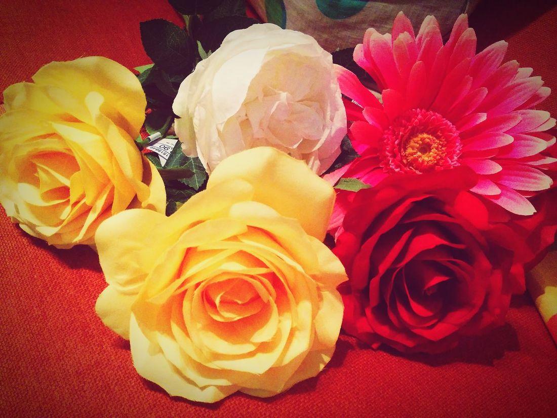 Flower Design Colour Roses Pink Nature Flowerlovers Flower Collection Flowerpower