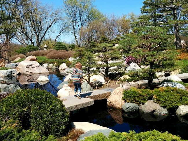 Walking carefully at the Japanese garden at Como Zoo! Kids Japanese Garden St Paul Minnesota