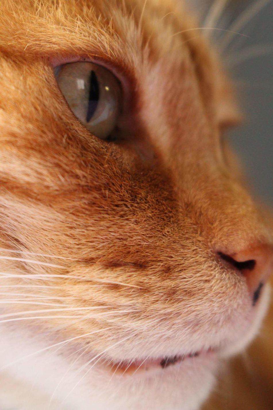 Meow! Cat Photography Cats Of EyeEm Close-up Eyes Closed  Eye Pet Pets Corner Pets Pet Love Meow Sideview Animal Animal Photography Canonphotography Canon700D Canon700dgallery Canon700dphotography Canon Catsoneyeem