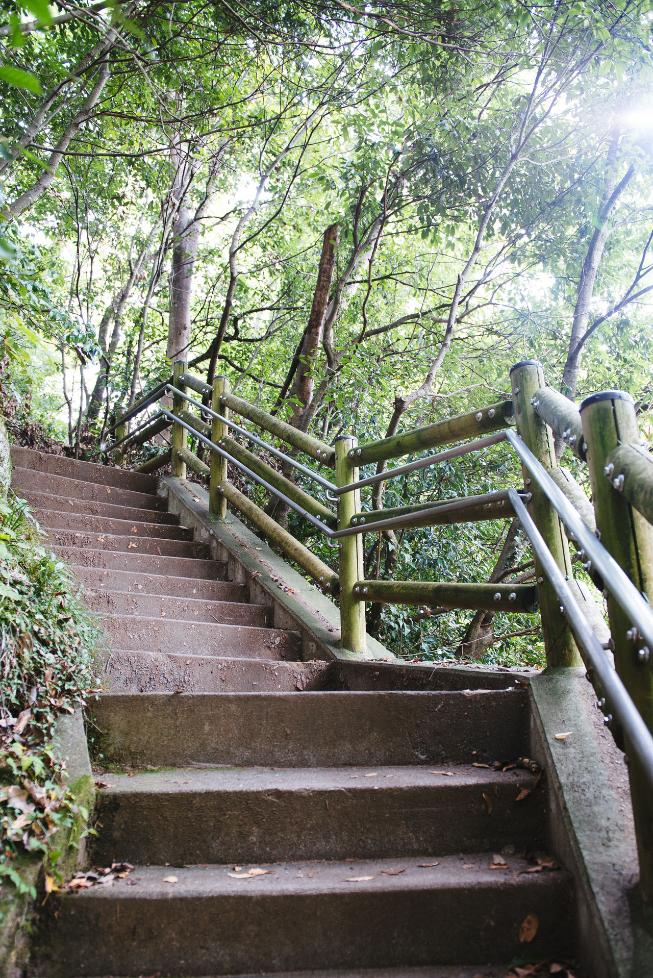The unknown path 2 Architecture Day Growth Nature No People Outdoors Railing Staircase Stairs Steps Steps And Staircases Tree