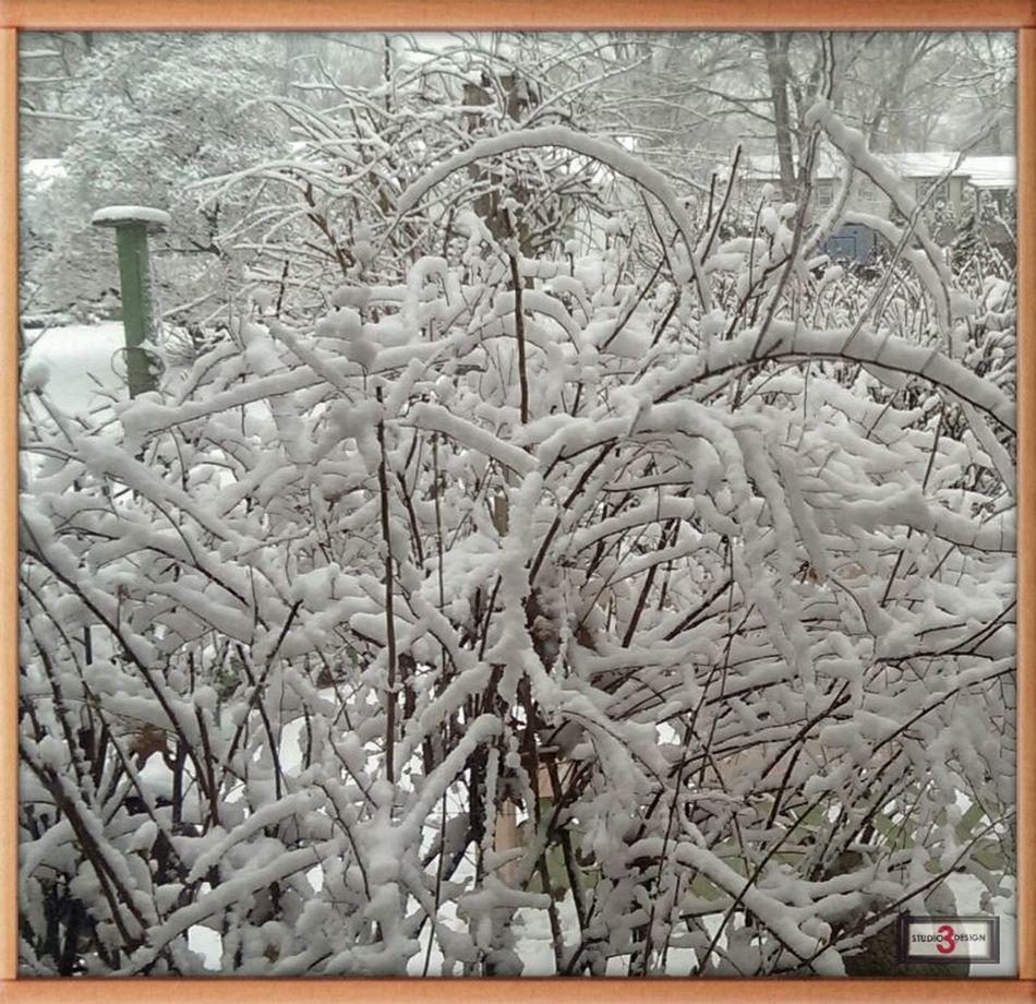 Out my Polar Window Today! Letitsnowletitsnowletitsnow Landscape Enjoying Life