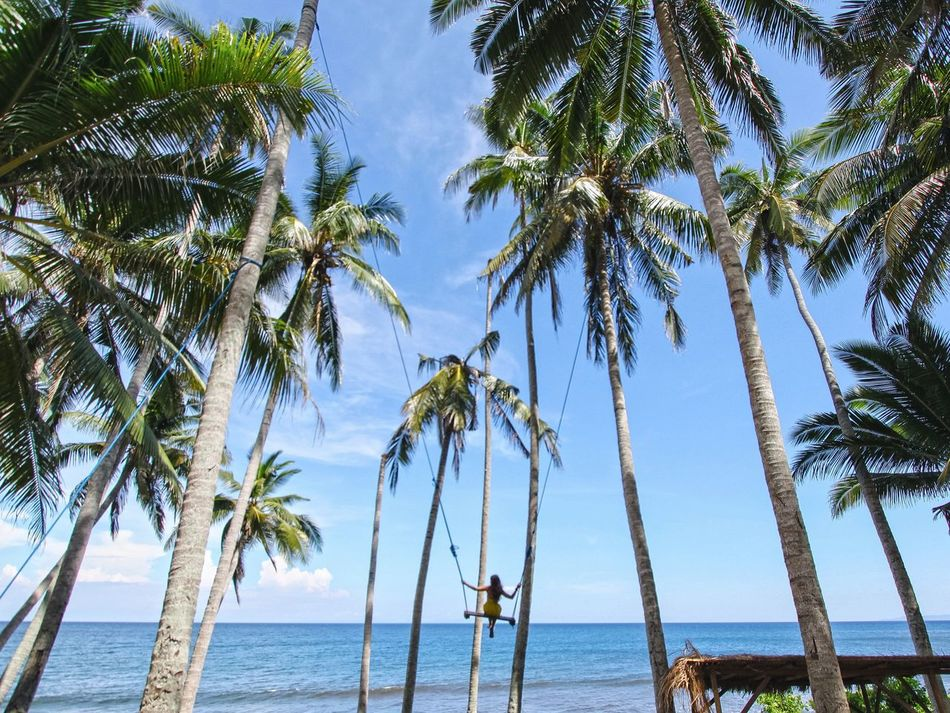 Beautiful stock photos of palm tree, Beauty In Nature, Blue, Calm, Day