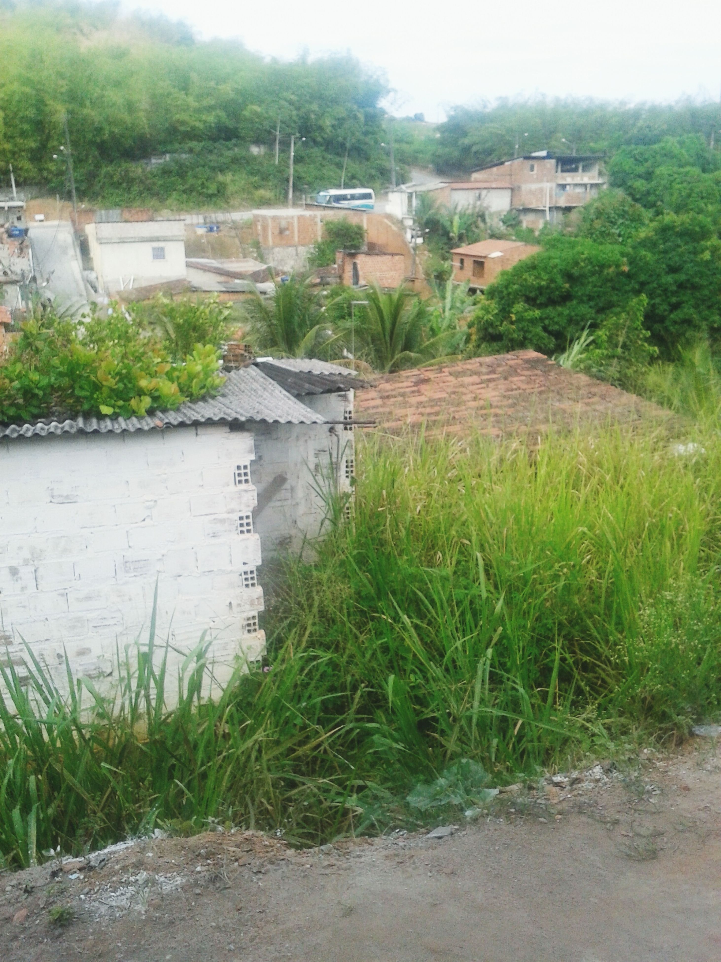building exterior, architecture, built structure, house, plant, grass, growth, residential structure, green color, residential building, field, tree, day, high angle view, outdoors, nature, no people, sky, growing, sunlight