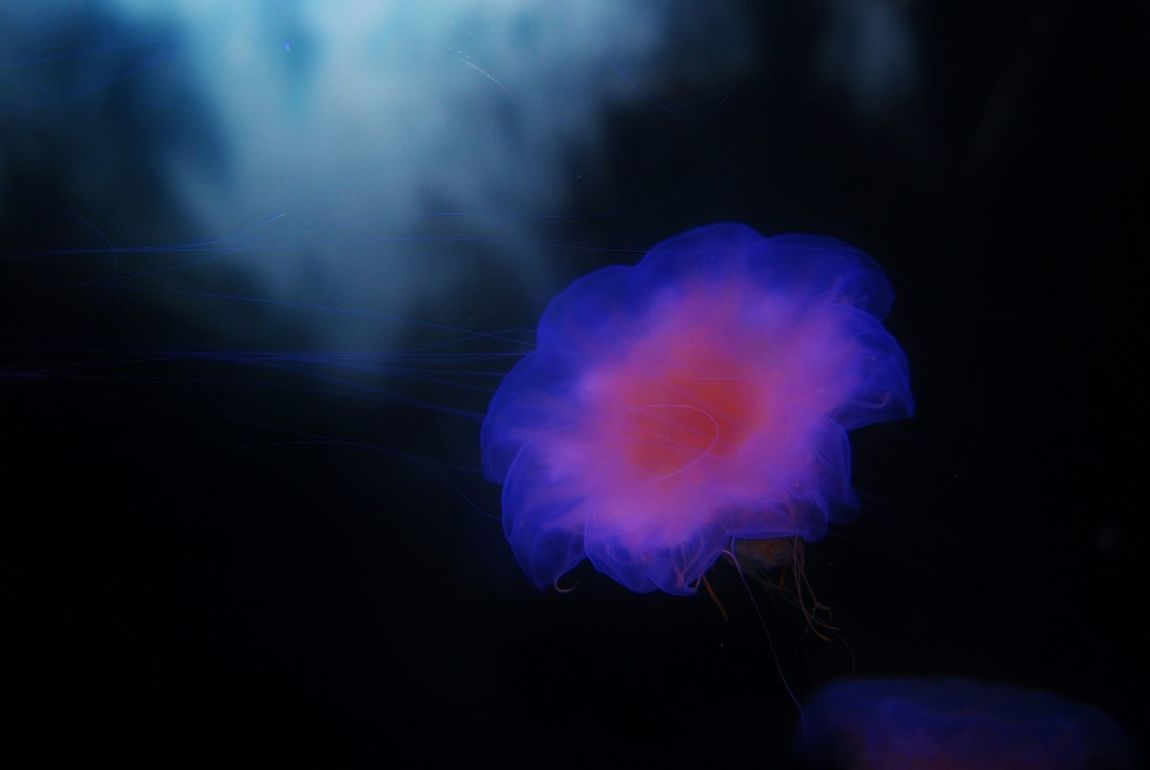Beauty & Grace 03 Jellyfish Sea_collection Life In Colors Seaflowing