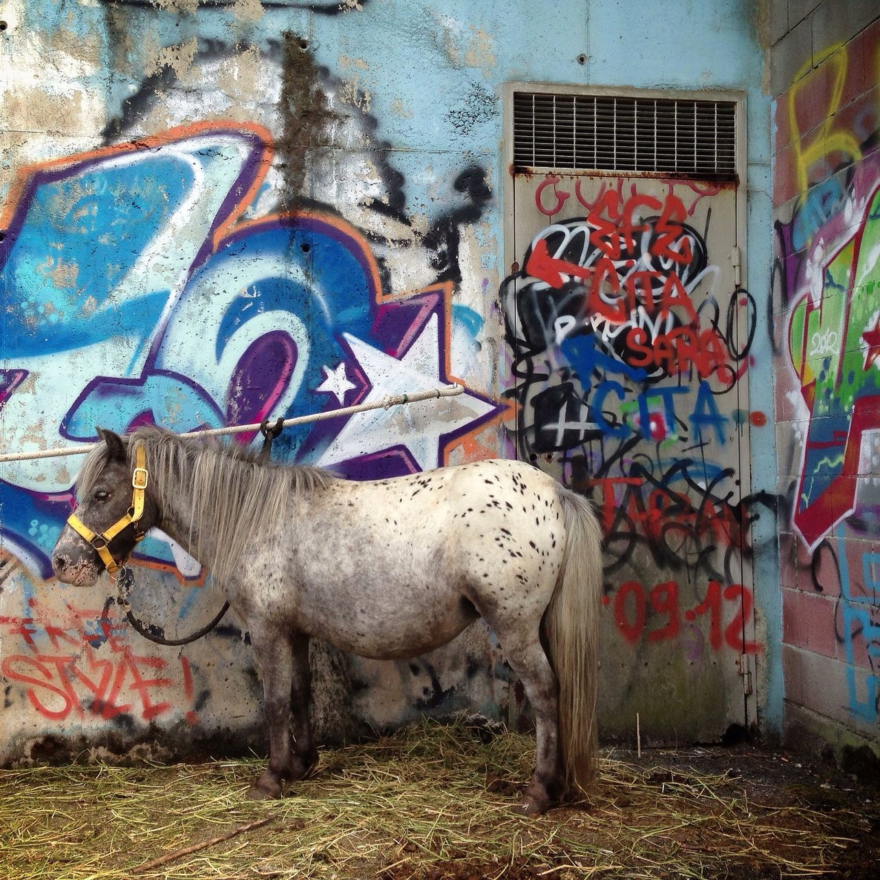 Beautiful stock photos of pony, Animal Themes, Architecture, Art, Art And Craft